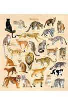 Je decouvre les felins en dessinant et en coloriant
