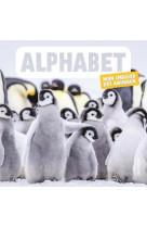 Alphabet. mon imagier des animaux